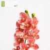 Орхидея Цимбидиум 3D