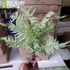 Папоротник 5 (пыльно-зеленый)