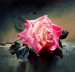 Картина по номерам Номерашка (Paintboy) «одинокая роза на земле»