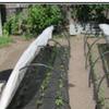 система капельного полива для парников 4,6,8 м