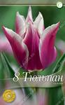 Тюльпан лилиецветный Клаудия, 8 луковиц