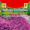 Тимьян (чабрец)Пурпурный ковер