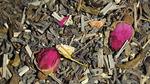 Чай зеленый Весенний