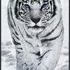 Полотенце махровое Белый тигр