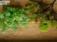 Зелень с круглыми листьями малая
