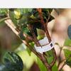 Клипсы для подвязки растений, набор 50 шт 9046243