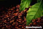 """Кофе зерно """"Кения АА"""",  упаковка 250 гр"""