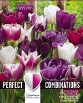 Тюльпан Виолет энд Вайт Бленд Микс (15 лук.)