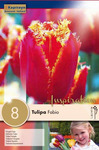 Тюльпан Фабио (8 лук.)